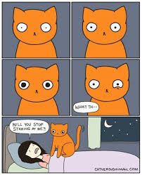 Why Does My Cat Sleep On My Bed 19 Best Things I Find Hilarious Images On Pinterest