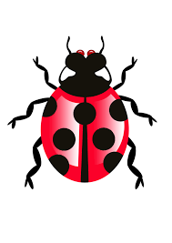 the best way to get rid of bugs png all