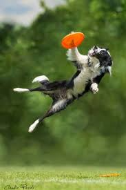 pictures dogs flying puppy dogs collie dog