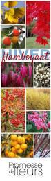 Ambiance Et Jardin Best 25 Le Jardin Des Fleurs Ideas On Pinterest Le Jardin Des