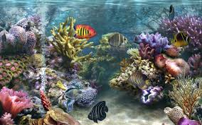 coral reef wallpaper coral reefs wallpapers 200 sea life coral reef wallpaper coral reefs wallpapers 200