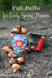 fall bulbs for early spring flowers lady lee u0027s home