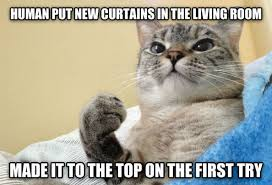 Success Cat Meme - success cat weknowmemes