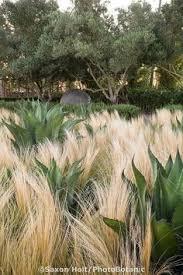 rubus thibetanus agm ornamental bramble 2m x 3m spot in