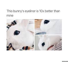 Eyeliner Meme - bunny s eyeliner funny clone