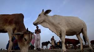 Related Pics 86 Killed In Cow Related Violence Since 2010 Are Muslim 97