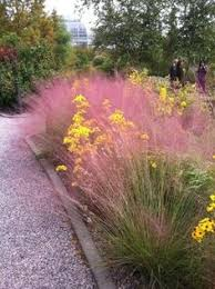 landscaping with ornamental grasses whidbey island grasses and
