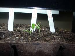 indoor sowing update perennial garden lover