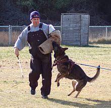belgian sheepdog training guide schutzhund wikipedia