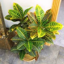 134 best houseplants images on pinterest house plants indoor