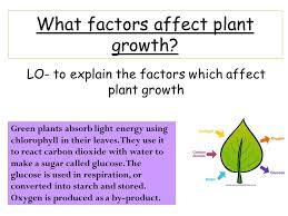 how does light affect plant growth what factors affect plant growth ppt download