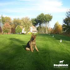 hidden dog fence customer photo gallery dogwatch by hudson