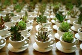 plant wedding favors stylish plants for wedding favors succulents coffee cups and cups