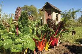 how to make money with organic gardening farm and garden grit