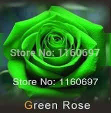 Free Shipping Flowers Aliexpress Com Buy Free Shipping Flowers Seeds Mix 9 Colour Rose