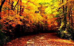 fantasy autumn wallpaper autumn wallpaper 1280x800 38677