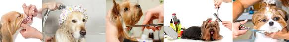 dog grooming coupons springfield il doggone gorgeous four paw salon