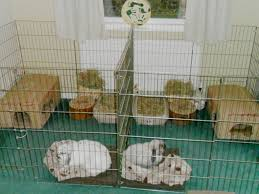 Rabbit Hutches For Indoors Rabbit Homes U0026 Hutches For Indoors Large Accommodation Ideas For