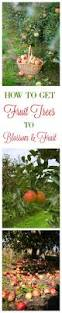 product display native plants of the midwest by alan branhagen 110 best fruit trees orchards and fruit vines images on pinterest
