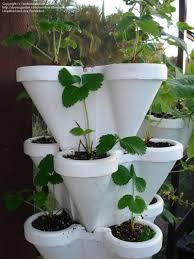 alternative gardening lighting question for indoor tomato garden