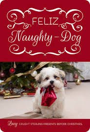 dog christmas cards christmas card ideas with pets wording photo ideas for cats dogs