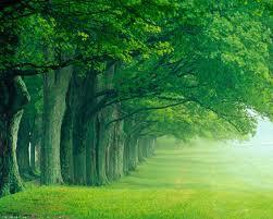 image green forest wallpaper jpg creepypasta wiki fandom