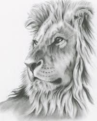 gallery art photos lion sketch drawing art gallery
