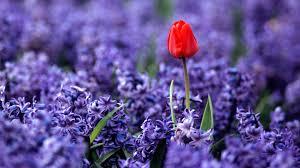 Beautiful Flowers Beautiful Flower Pictures Hd 6265 1920 X 1080 Wallpaperlayer Com