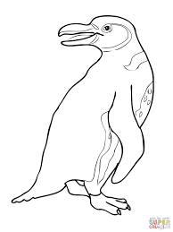 coloring pages animals galapagos penguin coloring page penguin