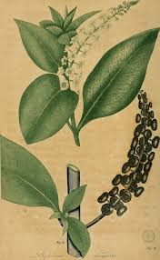 native american healing plants file american medical botany being a collection of the native