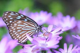 garden design gardening to attract butterflies