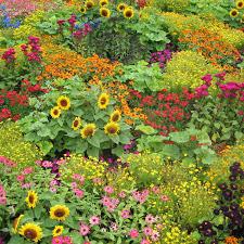 indian garden hamilton gardens nice flower garden photo