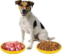 a complete guide to raw dog food diet paw castle