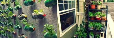 collection grow vegetables in apartment photos best image libraries