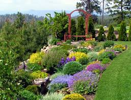 texas landscaping ideas interior purple yellow flowers with various kind of plants and