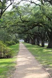trees and walkway picture of rice cus houston