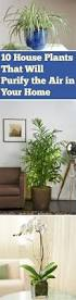 12 Best Plants That Can by 12 Easy Indoor Plants For Beauty Clean Air Nasa Environment