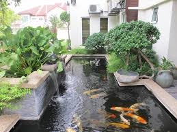 garden pond design and construction exprimartdesign com