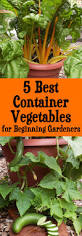 Gardening For Beginners Vegetables by 5 Best Container Vegetables For Beginning Gardeners Brown Thumb Mama