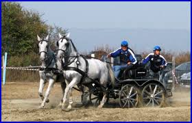 bianchi carrozze www lecarrozze bianchi it cavalli e carrozze che passione