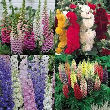 perennial garden vegetables cottage garden plants how to grow english cottage garden plants