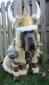 human dog costumes for halloween 466 best dog costumes images on pinterest animals dog costumes