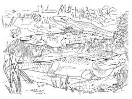 alligator coloring pages 5 arterey info