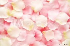 where can i buy petals background texture of pink and white petals buy this stock