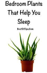 Plants For Bedroom Best 25 Good Plants For Bedroom Ideas On Pinterest Leaf Puns