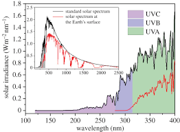 photophysics of sunscreen molecules in the gas phase a stepwise