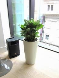 Office Plants by Office Plants And Flowers Brighten Any Reception Flowers By Flourish