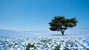 magical flower gardens in japan