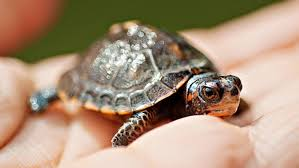 what is the symbolic meaning of a turtle reference com