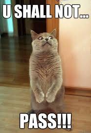 You Shall Not Pass Meme - u shall not pass cat meme cat planet cat planet